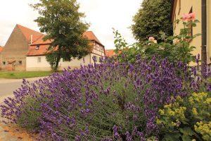 Blumenbeet mit Lavendel