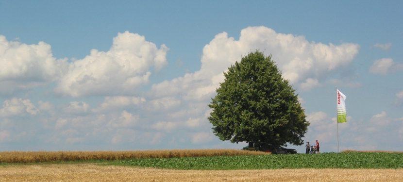 warm, feucht und sonnig: Wetter im Juni