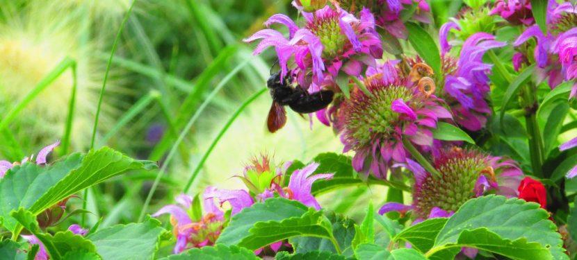 """Eintragung für das Volksbegehren """"Rettet die Bienen"""""""