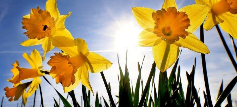 Monatsspruch April `20